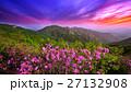 咲く 花 開花の写真 27132908