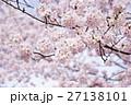 桜 満開 花の写真 27138101