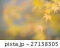 優美な黄色い紅葉 27138305