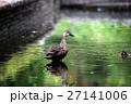 鳥 27141006