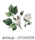 水彩画 イラスト 挿絵のイラスト 27142529