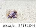 沖縄_砂浜を歩くムラサキオカヤドカリ 27151644