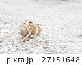 沖縄_砂浜を歩くオカヤドカリ 27151648