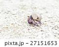 沖縄_砂浜を歩くムラサキオカヤドカリ 27151653