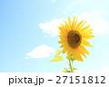 ひまわり 27151812