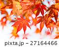 光に透ける紅葉もみじ 27164466