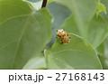 昆虫 虫 蟲の写真 27168143