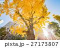 イチョウ 紅葉 公園の写真 27173807