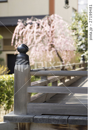 神社仏閣寺院の欄干と枝垂れ梅 27199481