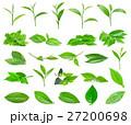 草の葉 葉 お茶の写真 27200698