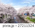 桜 桜祭り 五条川の写真 27211324