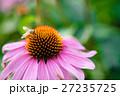 公園の花々 27235725