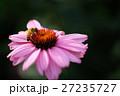 公園の花々 27235727