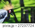 鳥 鶴 羽根の写真 27237724