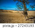 砂丘でも生きる根性の木 27243193