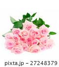 Pink blooming roses 27248379