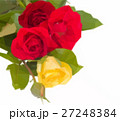 fresh multicolored roses 27248384