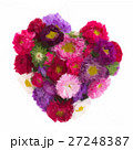 bouquet of aster flowers 27248387