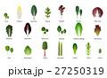 葉っぱ ベクトル ベジタブルのイラスト 27250319