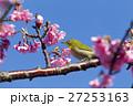 川津桜とメジロ 27253163