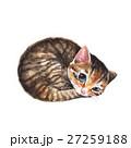 動物 ねこ ネコのイラスト 27259188