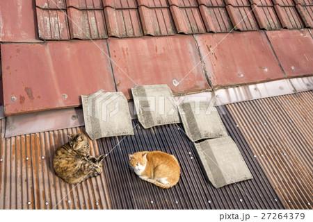 尾道の屋根で寝ている猫 27264379