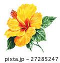トロピカル 花 ハイビスカスのイラスト 27285247