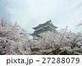 小田原城とソメイヨシノ 27288079