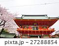 神田明神 随神門 桜の写真 27288854