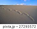 砂丘 鳥取砂丘 風紋の写真 27293572