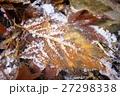 冬の落ち葉 27298338