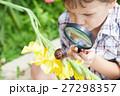かたつむり カタツムリ 蝸牛の写真 27298357