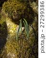 苔と植物 27299386