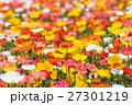 ポピー畑 27301219