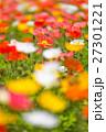 ポピー畑 27301221