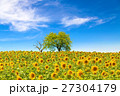 Sunflower field with trees 27304179