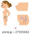 妊婦 4ヶ月 27305662