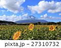 富士山 向日葵 夏の写真 27310732