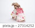 トイプードル 犬 小型犬の写真 27314252