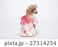 トイプードル 犬 小型犬の写真 27314254