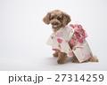 トイプードル 犬 小型犬の写真 27314259
