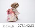 トイプードル 犬 小型犬の写真 27314283