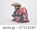 トイプードル 犬 小型犬の写真 27314287