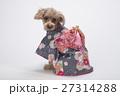 トイプードル 犬 小型犬の写真 27314288