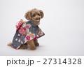 トイプードル 犬 小型犬の写真 27314328
