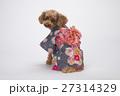 トイプードル 犬 小型犬の写真 27314329
