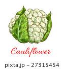 カリフラワー ベジタブル 野菜のイラスト 27315454