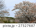 桜 27327687