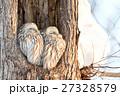 エゾフクロウの夫婦 27328579