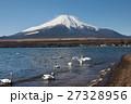 富士山 山中湖 白鳥の写真 27328956